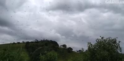 """E FRIKSHME/ Merimangat """"pushtojnë"""" një zonë malore në Brazil (VIDEO)"""