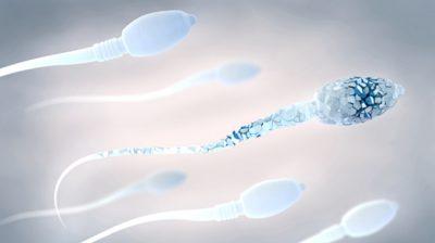 MESHKUJT E VENDOSIN PA E DITUR/ Ky është produkti që ua dëmton spermën
