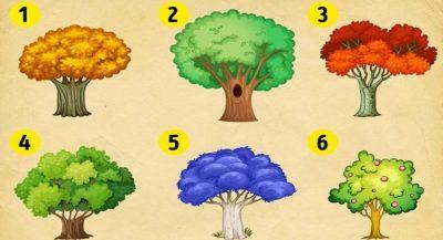 Zgjidh një nga pemët në foto dhe zbulo çfarë do ndryshosh në 2019