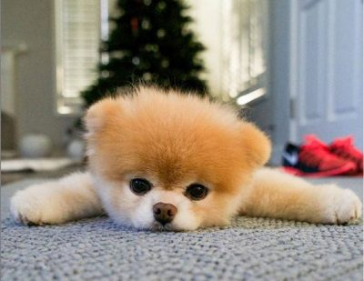 INSTAGRAMI NË ZI/ Vdes qeni më i adhuruar në botë (FOTO)