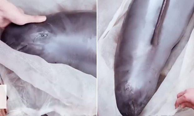 E TRISHTË/ Delfini shitet për mish në Kinë, banorët e filmojnë duke qarë (VIDEO)