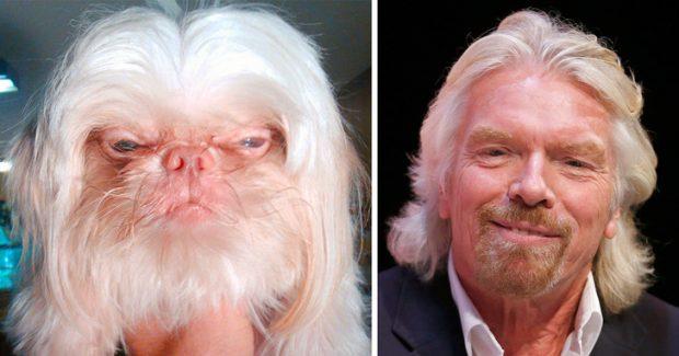 DO SHKRIHENI SË QESHUR/ Këto janë kafshët që ngjajnë me VIP-at (FOTO)