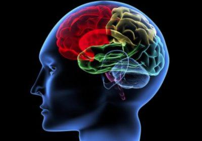 STUDIMI/ Ja përse truri i grave plaket më ngadalë