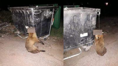 PAMJE TË RËNDA/ Dhelprën e varin në koshin e mbeturinave (FOTO)
