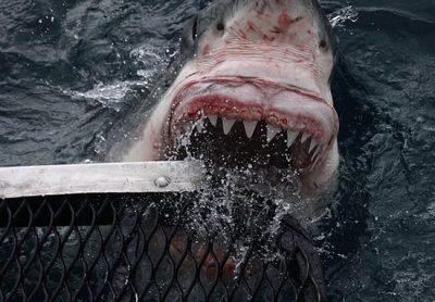 E FRIKSHME/ Peshkaqeni i bardhë 5 metra i gjatë i afrohet fotografit