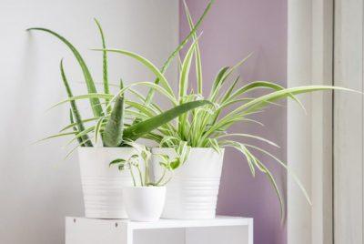 """""""NGA KIMIKATET TOKSIKE TE…""""/ 4 llojet e bimëve me """"superfuqi"""" që pastrojnë ajrin e shtëpisë menjëherë"""