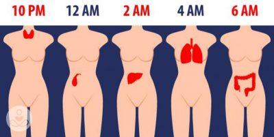 ÇDO ORAR ZGJIMI TREGON NJË PROBLEM/ Nëse zgjoheni në 3, 4 ose 5 të mëngjesit trupi juaj…