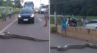 """""""SPEKTAKËL I VËRTETË""""/ Anakonda gjigande del në mes të rrugës dhe bllokon trafikun në Brazil"""