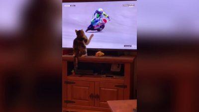 VIDEO VIRALE/ Macja prek ekranin, piloti i MotoGP rrëzohet në pistë