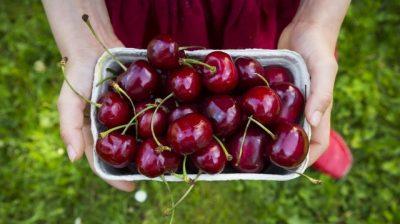 VLERAT E QERSHIVE/ Kokrrat e vogla të kuqe që këtë kohë po hanë të gjithë