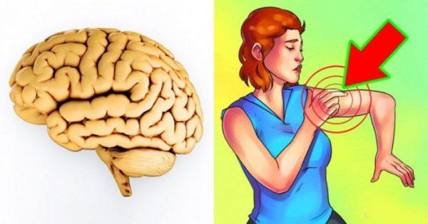 KENI KUJDES/ Këto shenja tregojnë se një goditje në tru po vjen