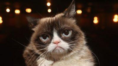 """KA MË SHUMË SE 2 MILIONË NDJEKËS NË INSTAGRAM/ Ngordh """"legjenda"""" e internetit, macja Grumpy"""