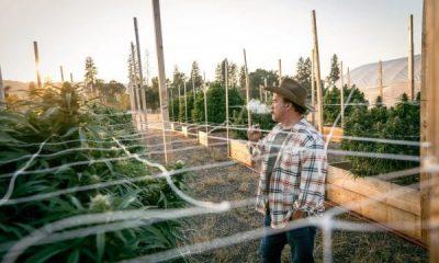 PUBLIKON FOTOT/ Aktori shqiptar që ka fermë ku kultivohet marijuanë
