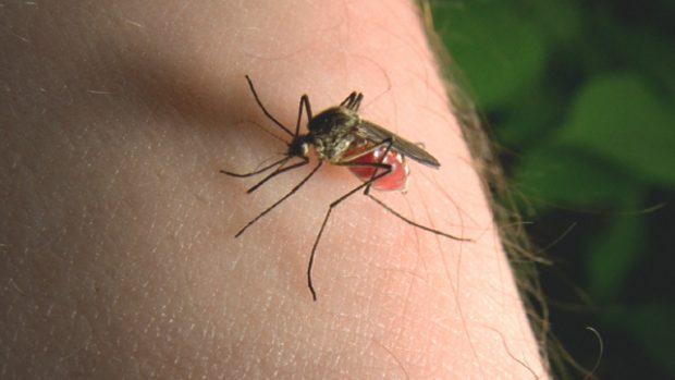 VDEKJEPRURËSE/ Këto janë sëmundjet që mund të vijnë nga pickimi i mushkonjave