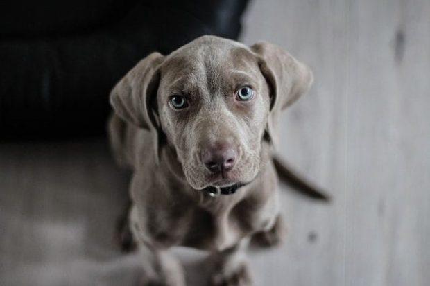 TË KUPTON SHUMË MIRË/ Të flasësh me qenin tënd nuk është çmenduri