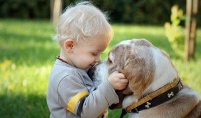 E DINIT? Përkëdhelja e një qeni ose një mace redukton…