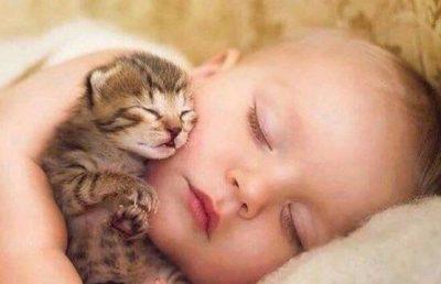 STUDIMI E THOTË/ Macet lidhen me njerëzit njësoj si bebet