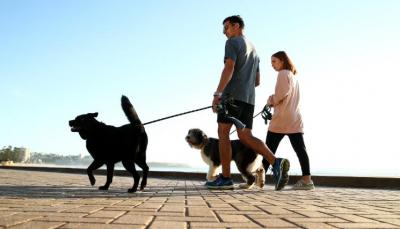 LIGJI I RI/ Do gjobiteni me mbi 2 mijë dollarë nëse nuk shëtisni qentë