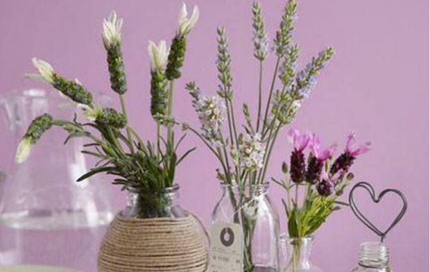 DUHET TI KENI PATJETËR! Lulet që do të ndryshojnë komplet pamjen e shtëpisë suaj