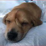 E VEÇANTË/ Zbulohet njëbrirëshi i parë në historinë e njerëzimit. Është ky qenush (FOTO)