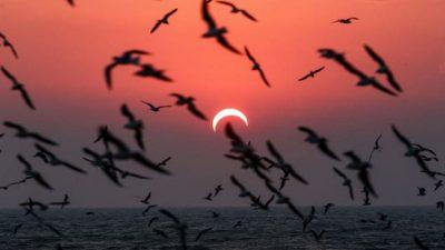 MOS I HUMBISNI/ Fotot më fantastike të eklipsit të fundit diellor të dekadës