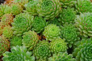 LULEAKULLI/ Bima që do e ndihmojë organizmin të jetojë gjatë