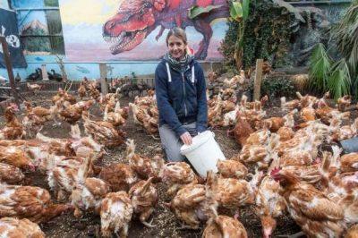 FRYMËZUESE! Gruaja mbledh 2.400 paund për të shpëtuar nga thertorja 4.000… pula