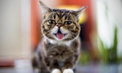 E NJOHUR NË INSTAGRAM E FACEBOOK/ Ngordh macja që e adhuronin miliona njerëz
