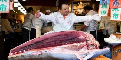 ANKANDI NË TOKIO/ Ja sa kushtoi peshku ton gjigant prej 276 kg