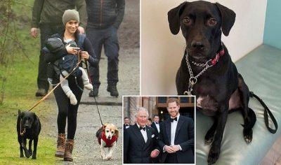 KORONAVIRUSI/ Meghan ndalon Harry të kthehet në Britani për të parë Princin Charles të infektuar me COVID-19