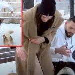 JU NDODH E PAPRITUAR NË TAKIM E DASHURISË/ Dy të rinjtë pjesë e emisionit kosovar sulmohen nga qentë (VIDEO)